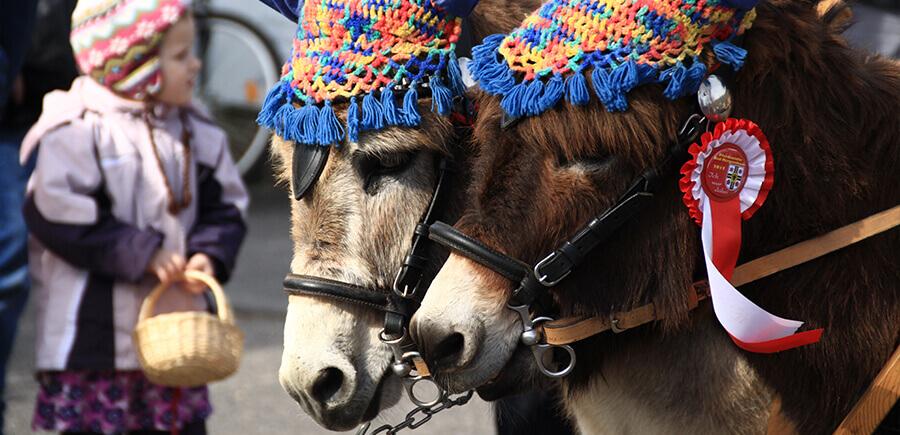 Zwei Pferde mit traditionellem buntem Geschirr.