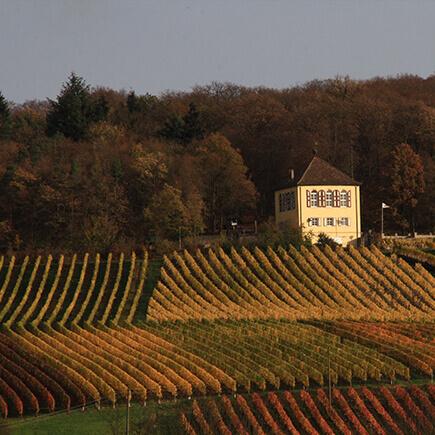 Herbstliche Weinberge in Weikersheim.