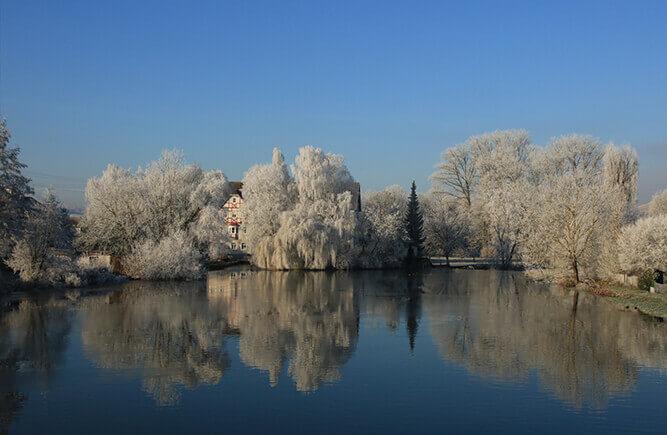 Winterliche Seenlandschaft mit verschneiten Bäumen.