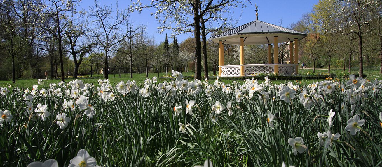 Blumenwiese vor dem Mondhäuschen im Schlosspark in Bad Mergentheim.