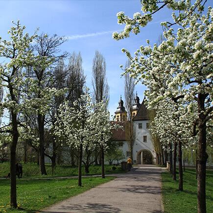 Baumallee im Schlosspark in Richtung Deutschordensschloss.
