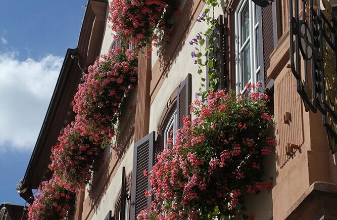 Blumen auf den Fensterbänken eines alten Gebäudes in Bad Mergentheim.