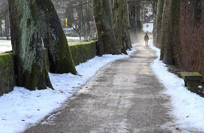 Verschneiter Weg mit großen Bäumen im Schlosspark in Bad Mergentheim.