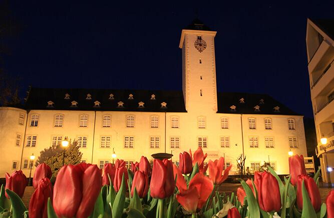 Blühende Tulpen auf dem Deutschordensplatz, im Hintergrund das Deutschordensschloss in Bad Mergentheim.