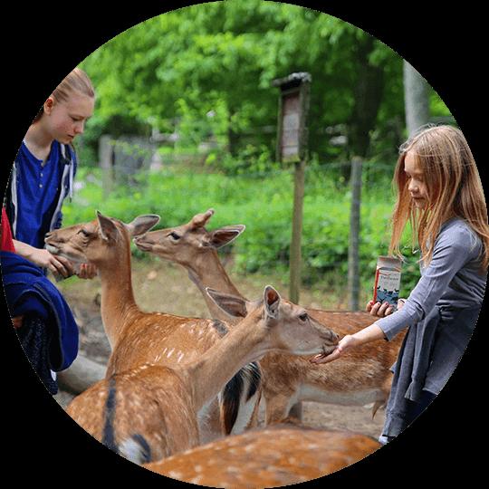 Mädchen beim Füttern eines Reh im Wildpark Bad Mergentheim